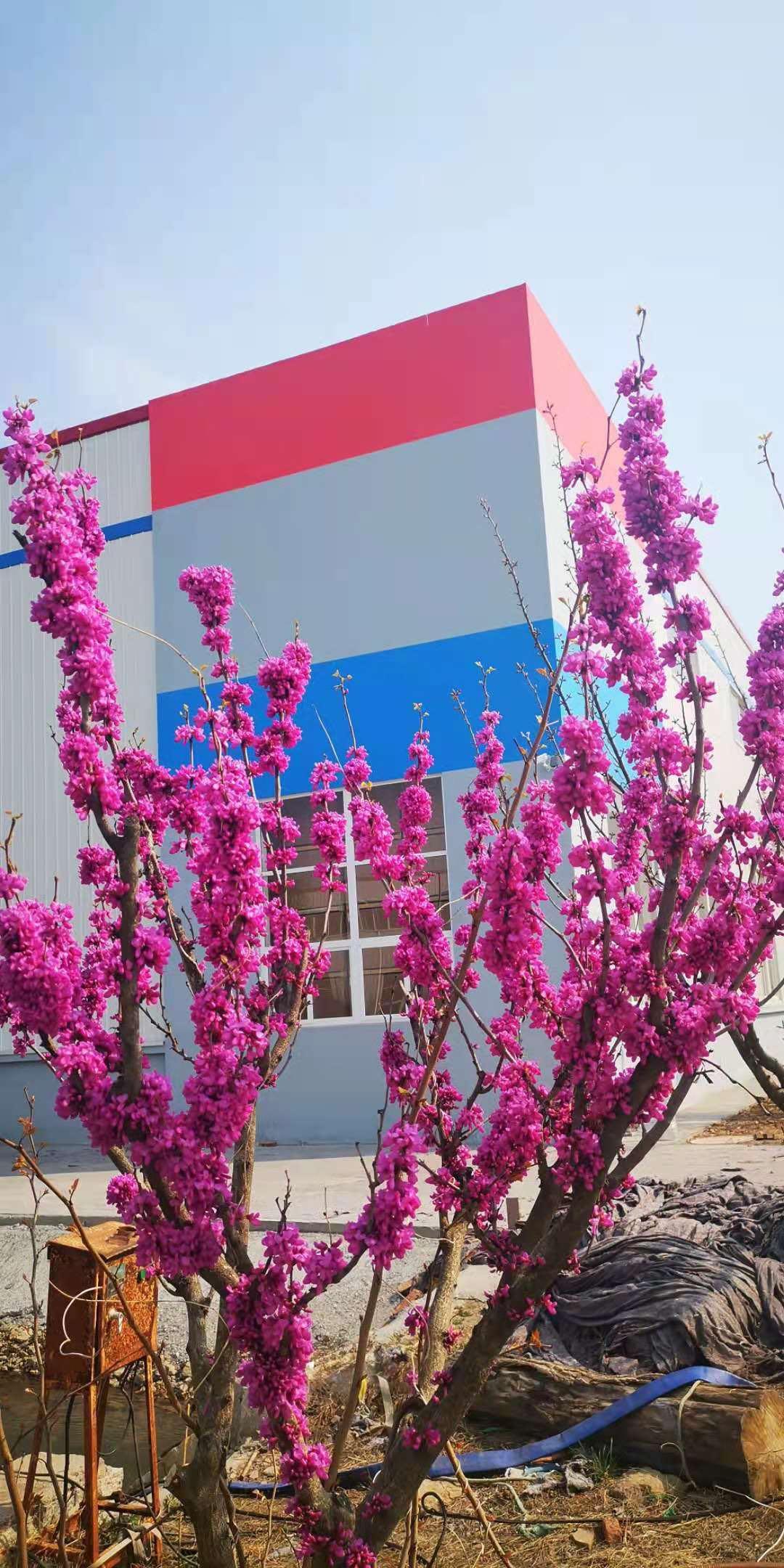 盼望着盼望着春天来了,华仕达工业园发货车辆穿梭不断